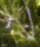 lumière_violette_bleue_autour_des_plante