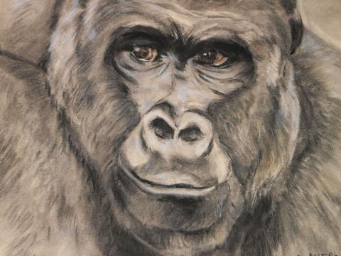 Gorille fusain. Tous droits réservé