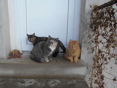 Mes chats. photo, Evelyne Cavallero
