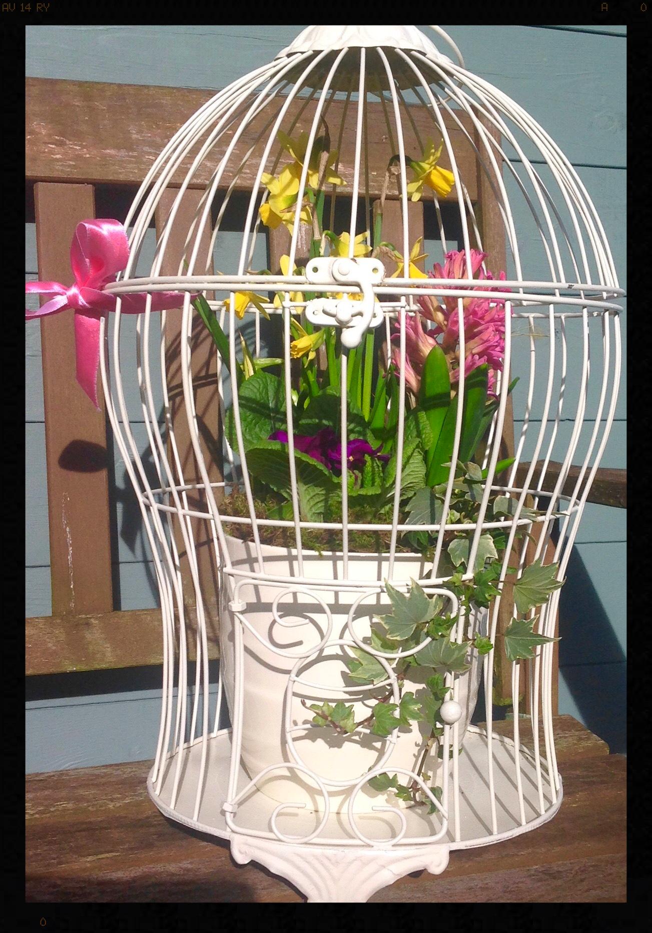 Birdcage planter gift