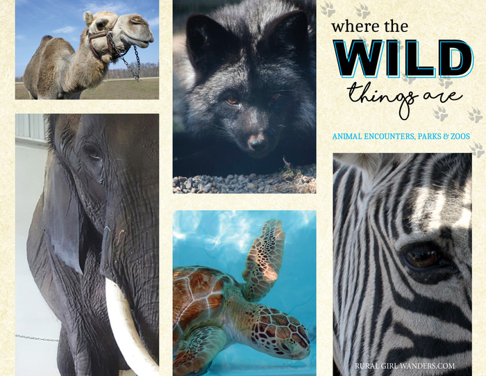 WHERE THE WILD THINGS ARE: ANIMAL ENCOUNTERS, PARKS & ZOOS