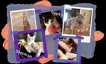 Hearts at Home Pet Sitting, Cat Sitting, Cat Care, Feline Care, Feline Sitting, Yorktown Virginia