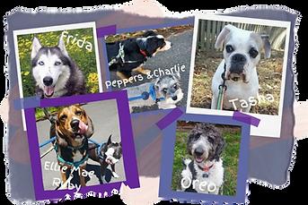 Hearts at Home Pet Sitting, Dog Care,Dog walking, dog, yorktown, dog walk, mid-day dog walks, professional dog walker