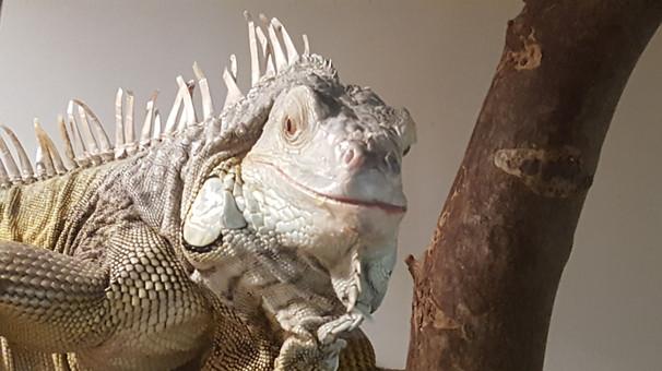 Reptile care Pet Sitting Yorktown Virgin