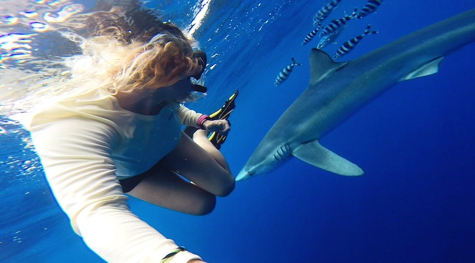 Freediving with blue sharks in the Azores