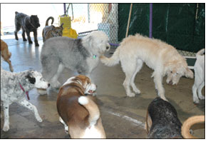 The Realities of Doggy Daycare