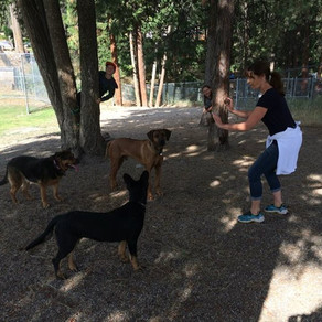 Training Your Dog to 'Wait' and 'Stay'