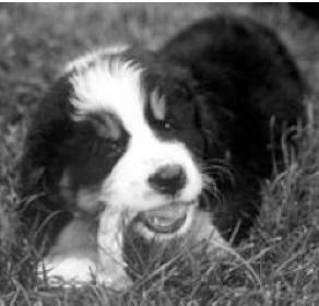 Feeding Bones or Raw Foods to Puppies