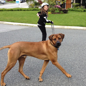 Ways to Manage an Adolescent Dog