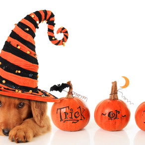 Preparation for Your Puppy's First Halloween