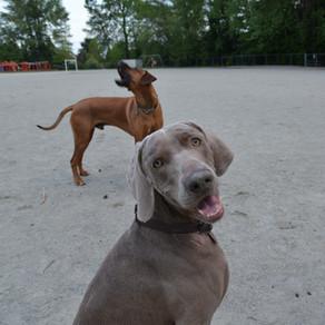 Modifying Your Dog's Barking Behavior