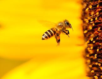 apibee, ergonomiel, ergonomiel, miel, apiculture