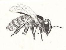 Taryn Bee.jpg