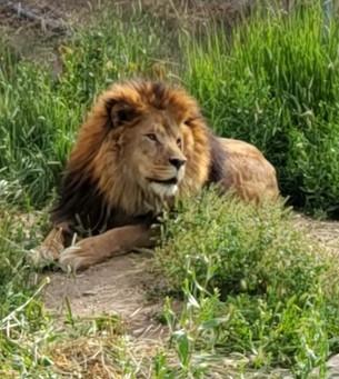 Leo June 16 2021.jpg