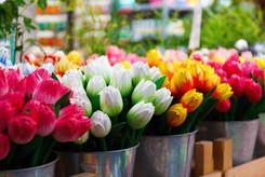 flower-69490.jpg