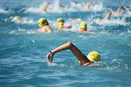 Triathlon swimmers inthe open sea,view from behind.jpg