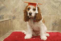 2016 Beginner and Intermediate Grads