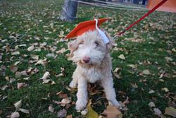 Oct 23, 2016 Beginner Graduation