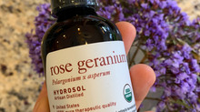 Rose Geranium (Pelargonium graveolens var.roseum and variants) Hydrosol and Plant