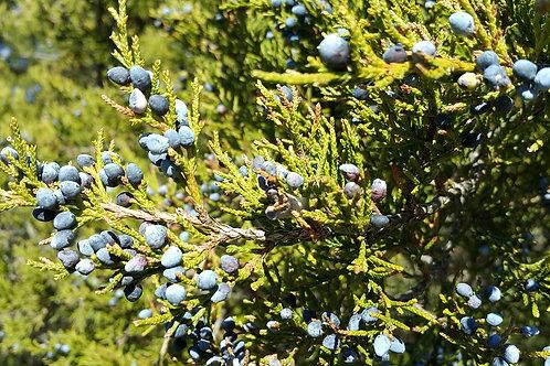 Cedarwood (Juniperus virginiana)