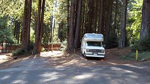 Redwoods and Ocean Beauty  |  Santa Cruz CA