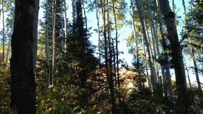 Lambs Canyon Trail | near Park City, UT