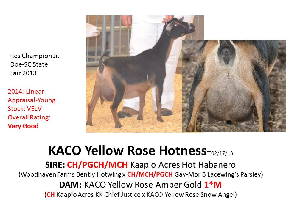 KACO Yellow Rose Hotness.jpg