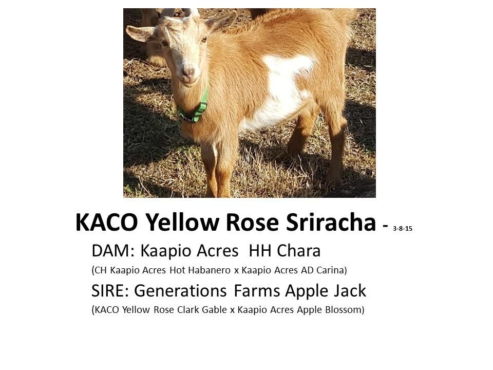 KACO Yellow Rose Sriracha.jpg