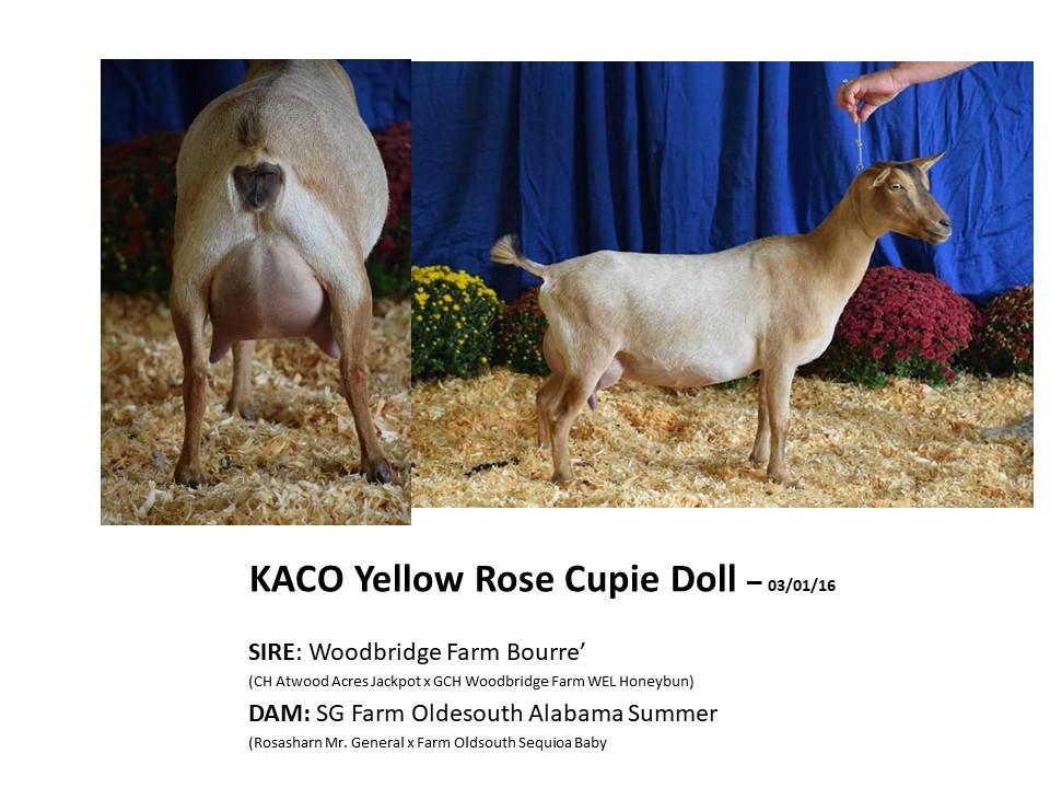 KACO Yellow Rose Cupie Doll.jpg