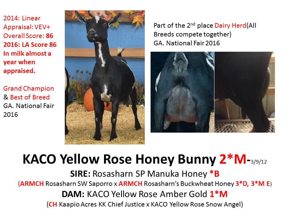 KACO Yellow Rose Honey Bunny.jpg