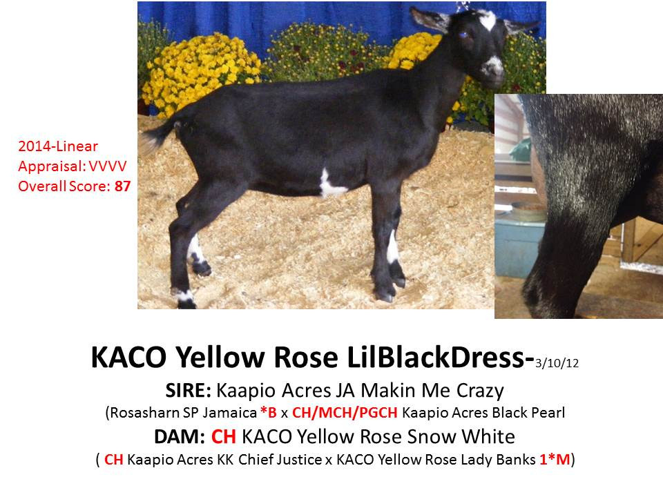 KACO Yellow Rose LilBlackDress.jpg