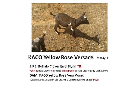 KACO Yellow Rose Versace.jpg