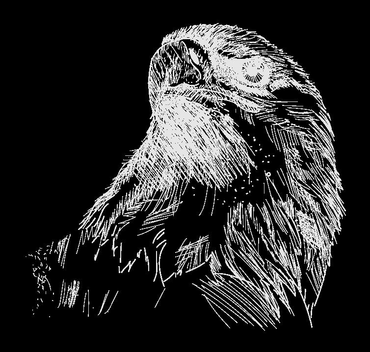 US_National_2020_web_eagle.png