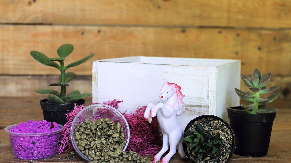 Unicorn Succulent Garden To Go