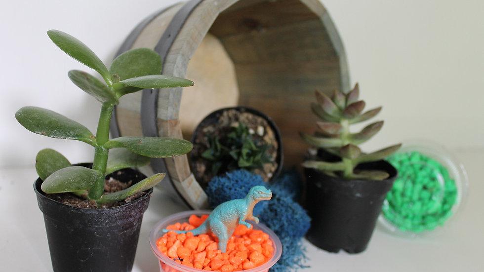 Surprise Succulent Garden!  Available until 9/24 only!