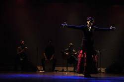 Flamenco (681)