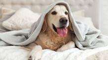 Corona – Die wichtigsten Antworten für besorgte Hundehaltende