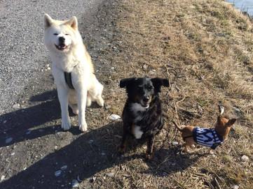 Ausflug mit Freunden - Ronja und ihre Buddy's