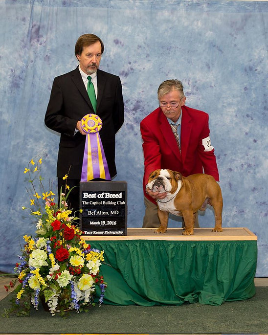 BISS GCH Cherokee Legend NoFoolin' Mannys Roman Holiday winning Best of Breed , Best in Show