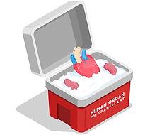 transplantation 2.jpg
