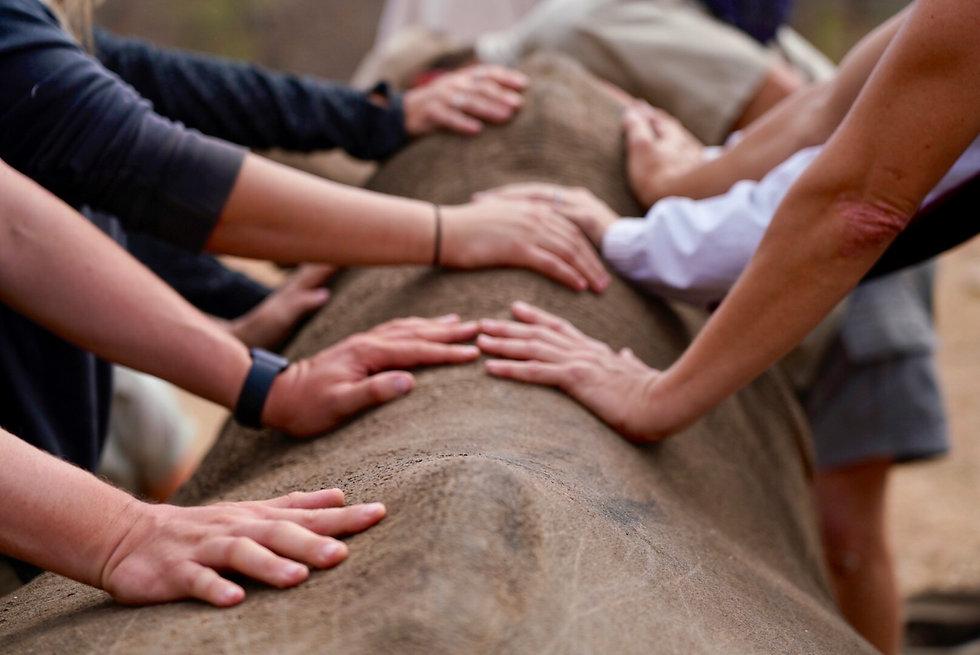 Rhino hands.jpg
