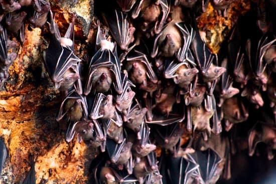 Bat cave, Pokhara