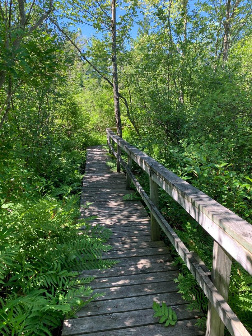 Swamp Walk