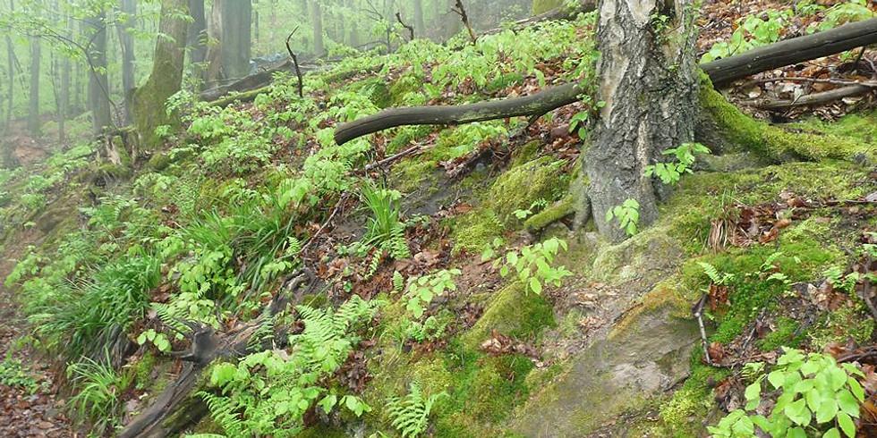 Wald Natur Ritual für große und kleine Menschen
