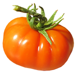 tomato-3025278_960_720.png