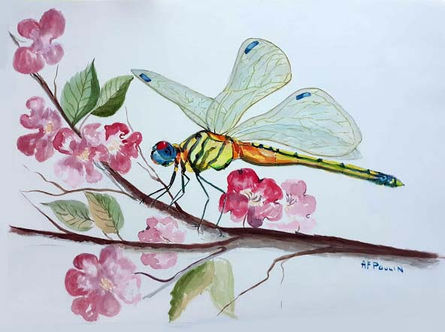 Damselfly and Apple Blossoms