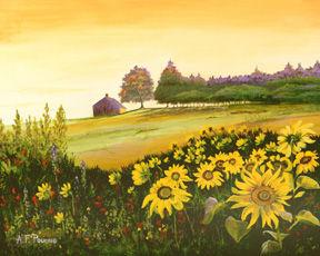 Sunflowers - Leeds, Maine