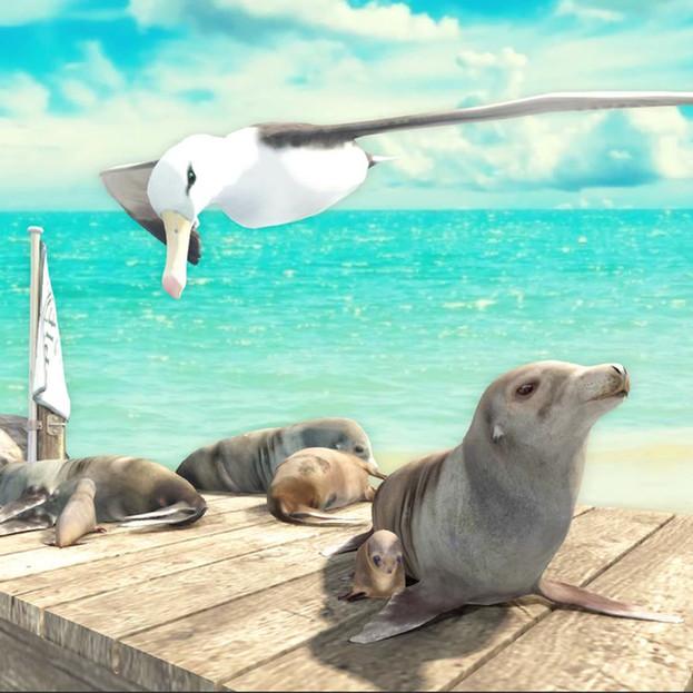 Beach & marine wildlife