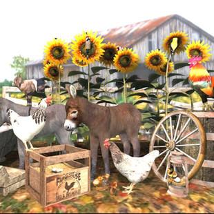 Farrm & backyard animals