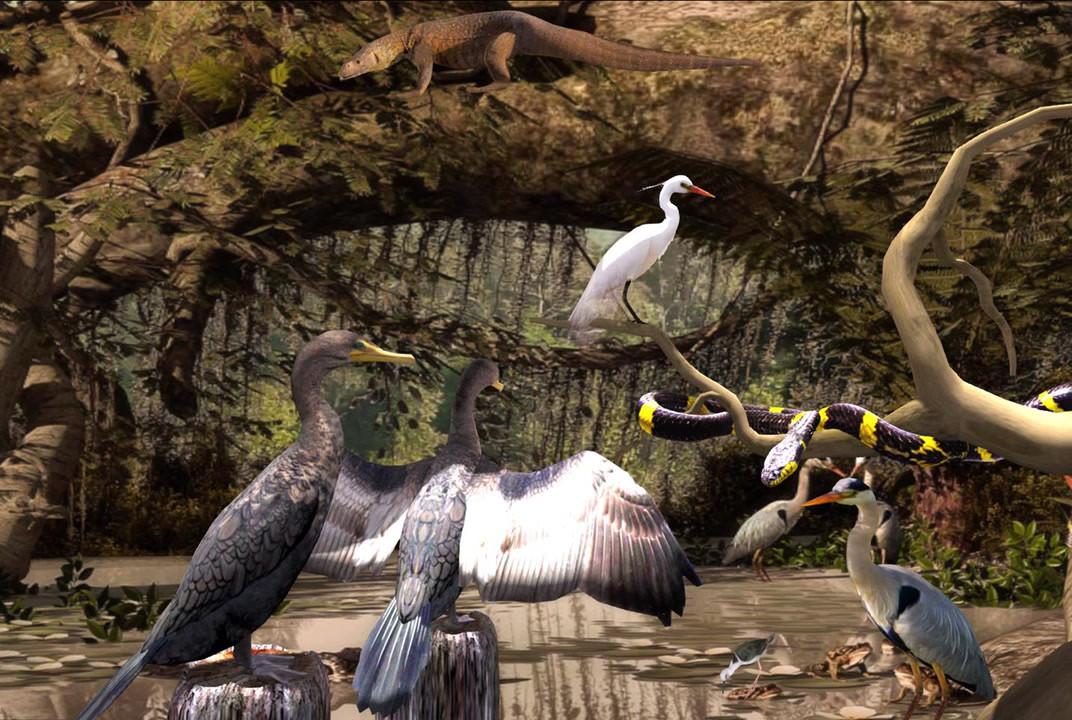 Swamps & Wetlands animals
